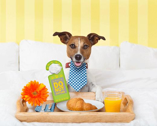 Dog In A Hotel