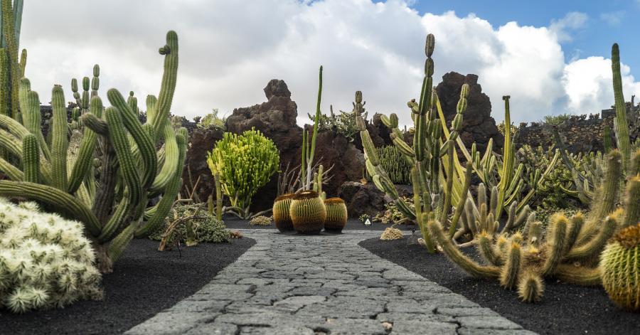 Cacti in the gardens