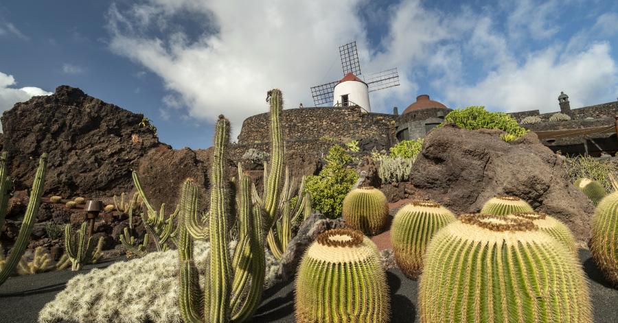Jardín de Cactus windmill