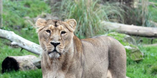 Chessington World of Adventures Zoo